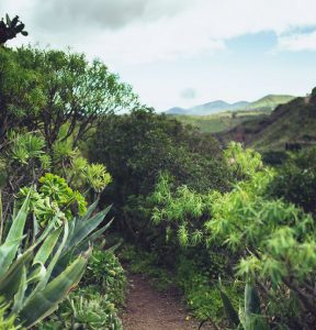 Leiebil & bilutleie på Gran Canaria